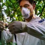 UW–Madison epidemiologist Tony Goldberg investigating primate disease in Africa