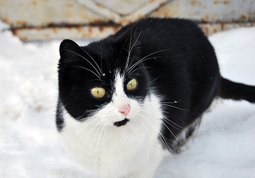 Cat outside in winter