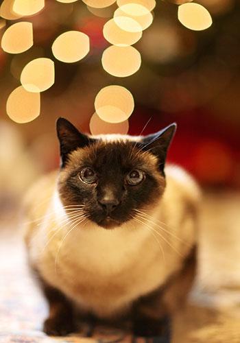 Cat and decorative lights