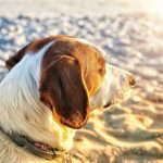 dog in sun on beach