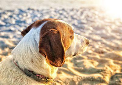 dog in sun on beach