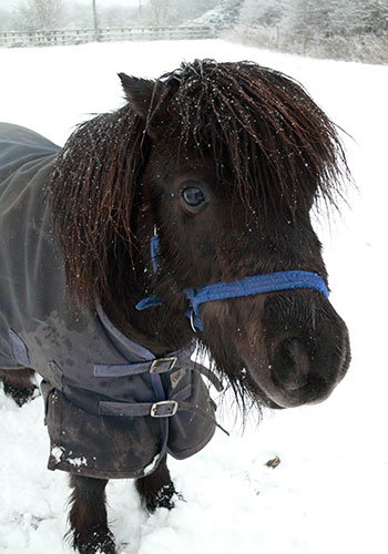 Pony in snow wearing blanket