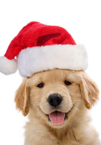 Puppy with santa hat