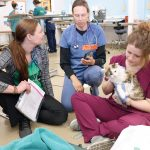 Three women, veterinarian techs and volunteers, sit on floor of clinic with cat during spay and neuter clinic