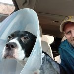 Man sits in car with his dog, Sarge, wearing a plastic head cone.