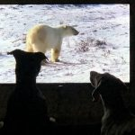 Two dogs sit in front of a TV screen showing polar bear in the snow.