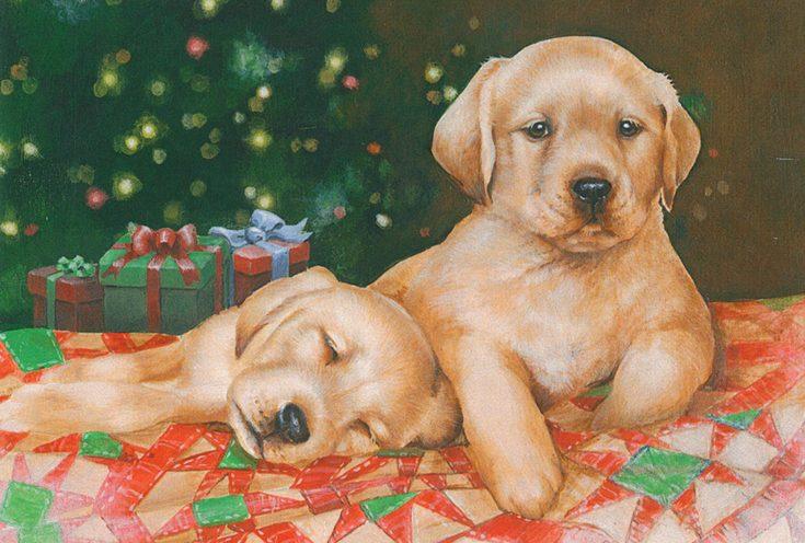 two lab puppies. one awake. one asleep