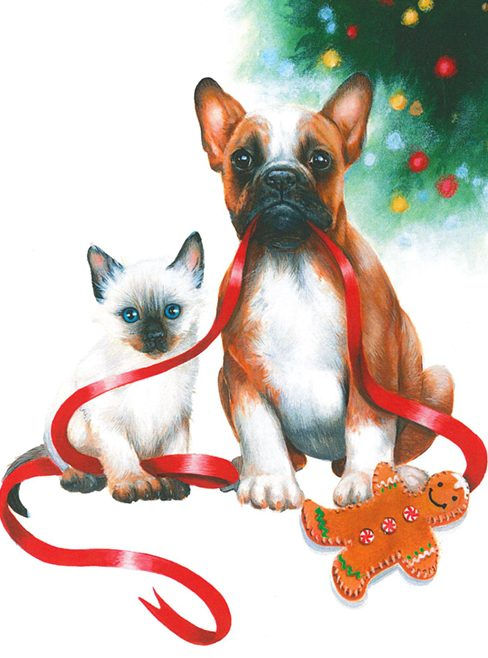 Dog and cat playing with red ribbon
