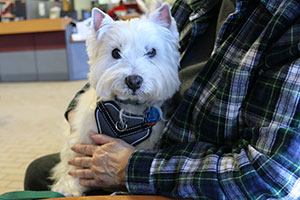 Photo: West Highland White Terrier Amy