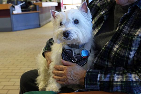 Westie patient of UW Veterinary Care