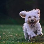 photo: dog running in grass