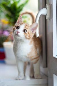 orange tabby cat near window