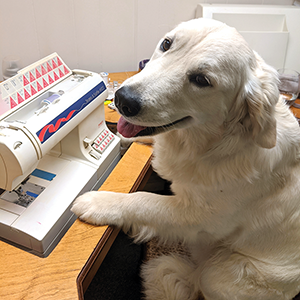 Funny photo of white dog sitting at sewing machine