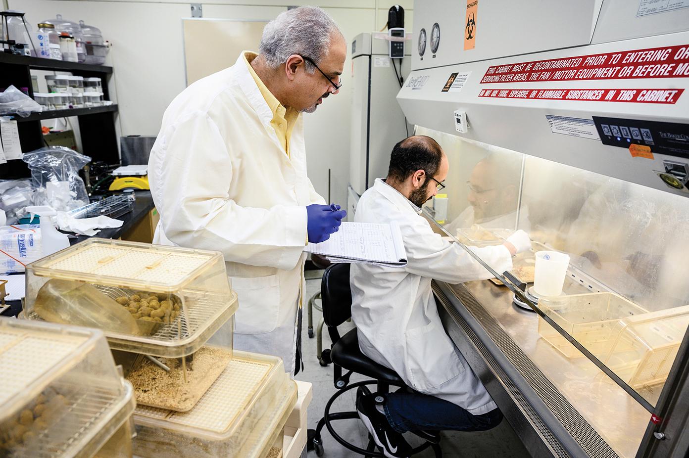 Two scientist work side by side in lab under hood