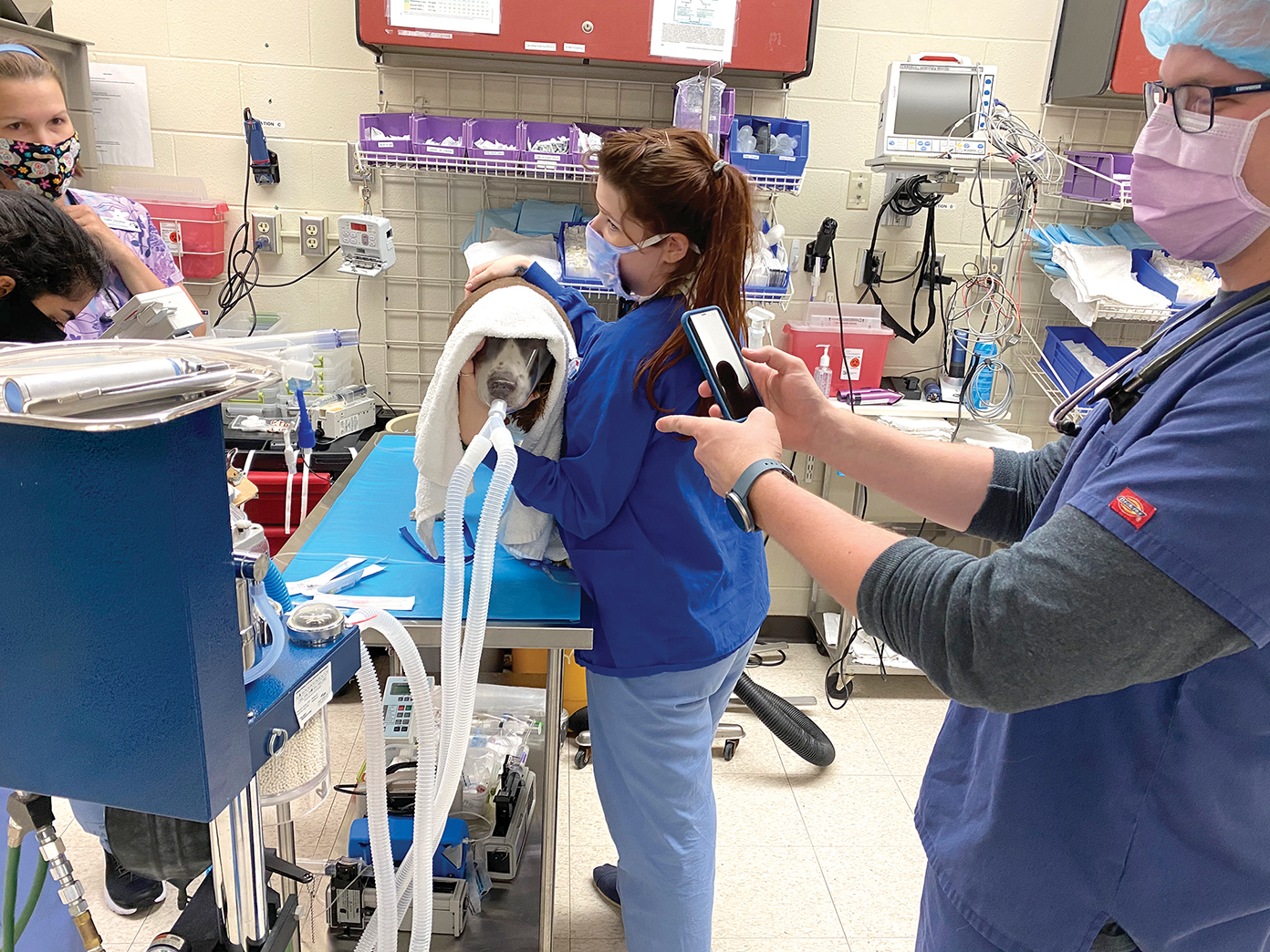 Dog on exam table with veterinarian staff wearing masks.
