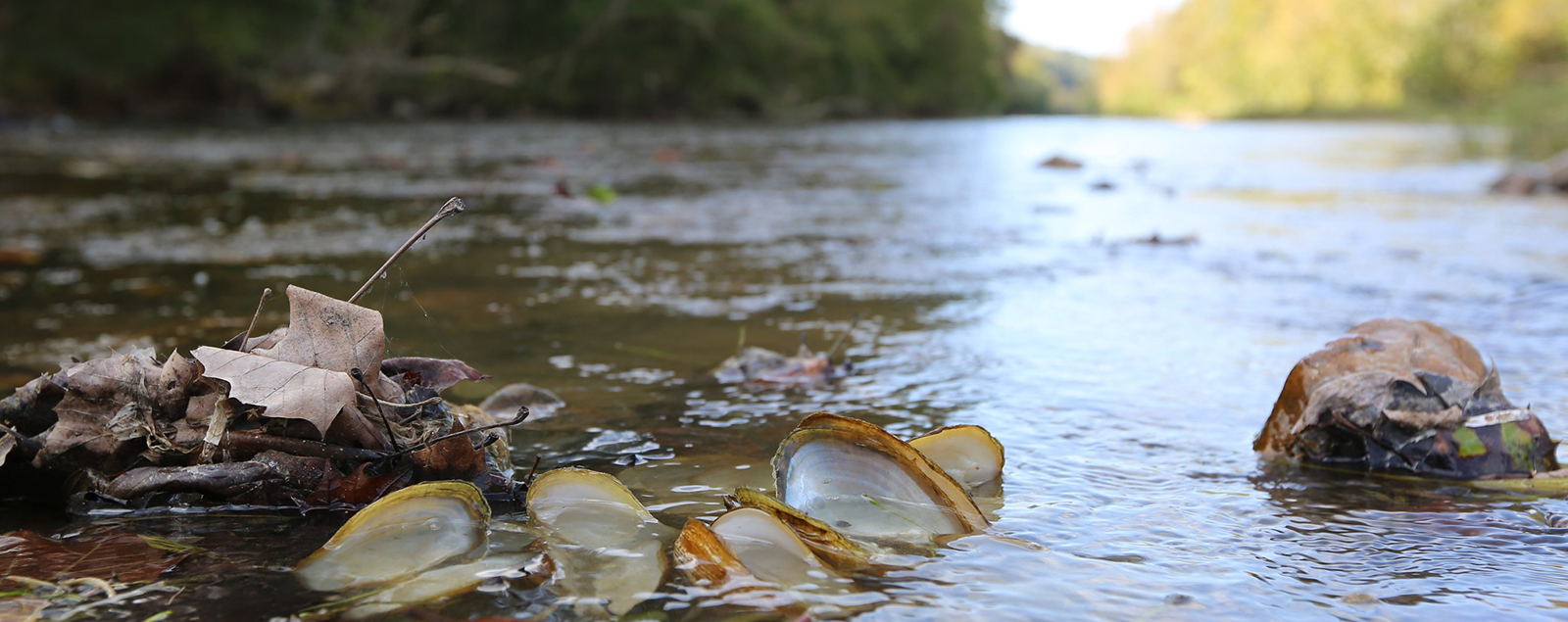 streamed with open mussel shells in water