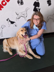 Associate professor Gillian McLellan completes an eye exam of a golden retriever at Badgerland Kennel Club