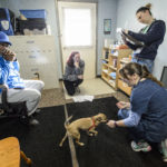 University of Wisconsin-Madison School of Veterinary Medicine students perform a check-up visit with owners Clarence and Kelly and their dogs Ike and Tina at a Wisconsin Companion Animal Resources, Education and Social Services (WisCARES) clinic in Madison in October 2015
