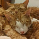 Cat patients of WisCARES