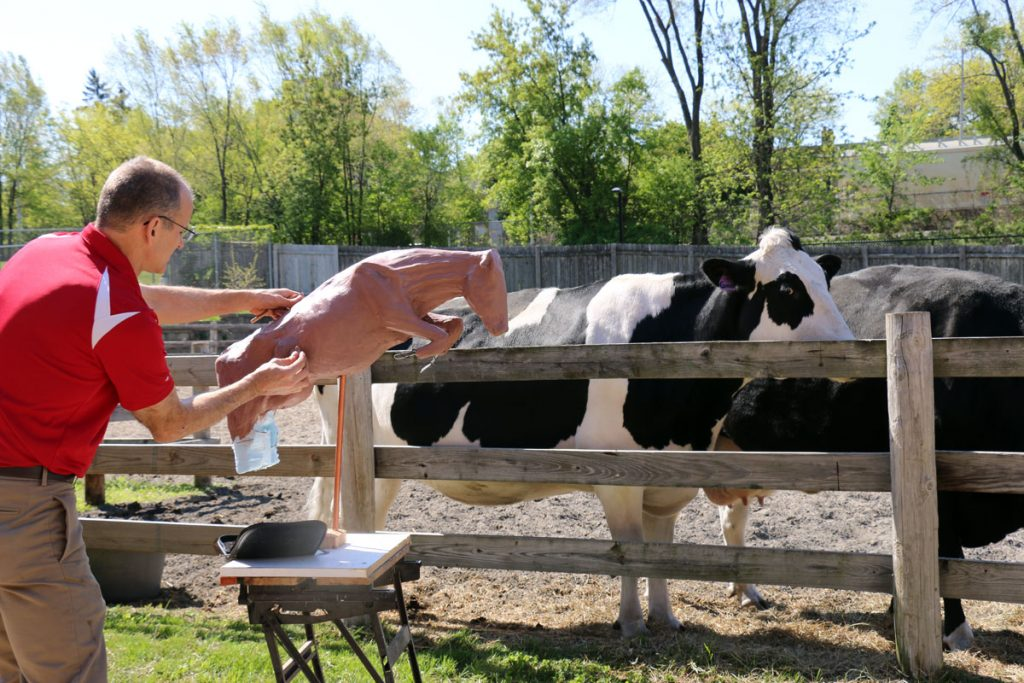 Hallett draws inspiration for his sculpture from the school's resident donor and teaching cows